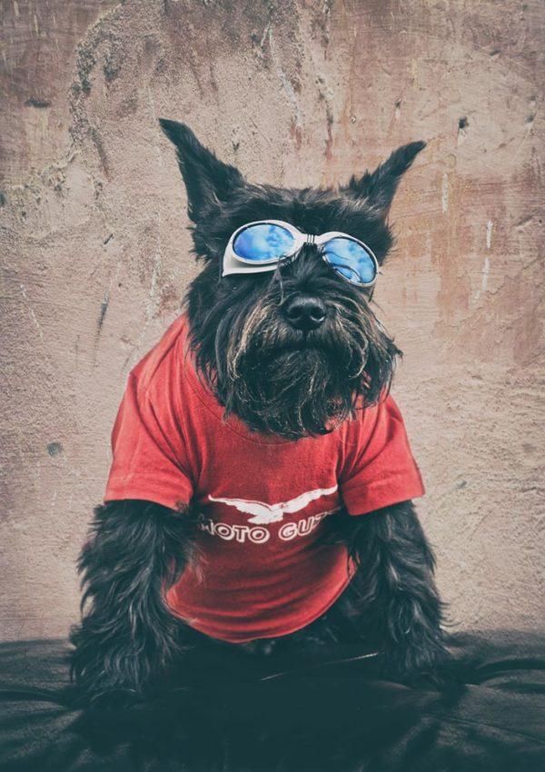 Hund, Herrchen und viel Moto Guzzi